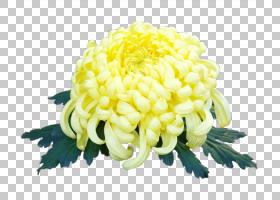 花卉剪贴画背景,花卉,花卉设计,雏菊家庭,花瓣,菊花,颜色,软件,切