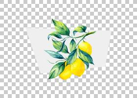 水彩花卉背景,花卉设计,食物,静物摄影,水果,植物群,植物,花,黄色