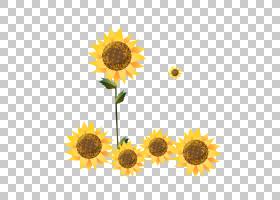 水彩花卉背景,花卉设计,黄色,花卉,雏菊家庭,花瓣,向日葵,葵花籽,