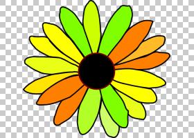 花束画,线路,切花,圆,黄色,植物,黛西,花瓣,向日葵,对称性,叶,植