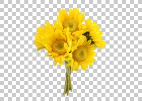 花束画,花卉,蒲公英,非洲菊,雏菊家庭,葵花籽,切花,向日葵,玫瑰,W