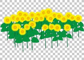 花卉剪贴画背景,花卉,草,切花,黄色,雏菊家庭,花瓣,蒲公英,向日葵