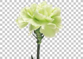 粉红色花卡通,人造花,粉红色家庭,植物,白色,玫瑰,切花,粉红色,植