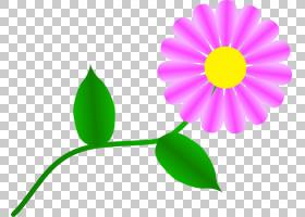 花线,线路,植物茎,黛西,雏菊家庭,黄色,花瓣,叶,植物群,植物,演示