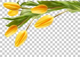 花卉剪贴画背景,芽,橙色,植物茎,植物,花卉,颜色,切花,人造花,花