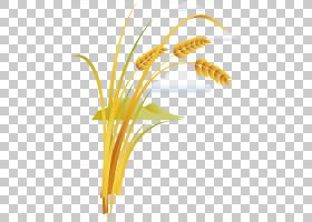 花卉剪贴画背景,草,线路,植物茎,切花,花,黄色,草族,花瓣,商品,植