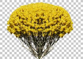 花卉剪贴画背景,草,芥末,黄色,连翘,亚历山大・冯・林格谢姆(Alex