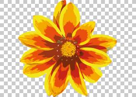 花卉剪贴画背景,草本植物,一年生植物,大丽花,橙色,雏菊家庭,金盏