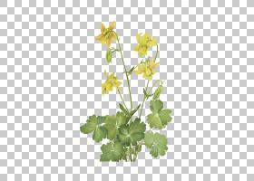 花卉剪贴画背景,草本植物,常春藤,植物茎,分支,花盆,植物群,植物,