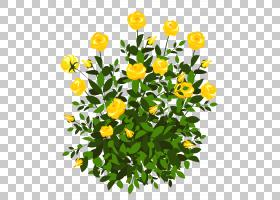 花卉剪贴画背景,草本植物,花卉,草,一年生植物,金盏花,黛西,植物