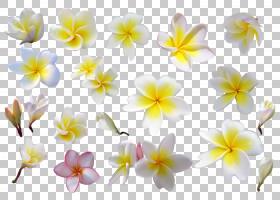 花卉剪贴画背景,草本植物,野花,黄色,植物群,绘图,博客,花瓣,玫瑰