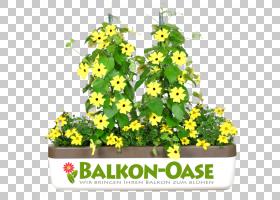 花卉剪贴画背景,草药,花卉设计,树,灌木,植物群,黄色,植物,想法,