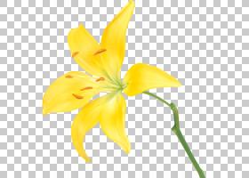 花卉剪贴画背景,莉莉,花瓣,植物群,绘图,植物茎,切花,卡通,植物,