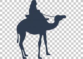 开斋节剪影,骆驼状哺乳动物,家畜,马,贝拉姆,开斋节阿拉达,开斋节