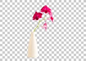 花卉背景,洋红色,植物茎,切花,蛾兰,花瓶,花盆,花瓣,植物,郁金香,