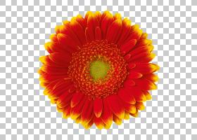 花束,人造花,多年生植物,向日葵,花粉,瞪羚,植物,英国万寿菊,花瓣