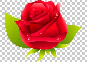 花粉色,人造花,山茶花,特写镜头,玫瑰秩序,植物,玫瑰家族,粉红色,