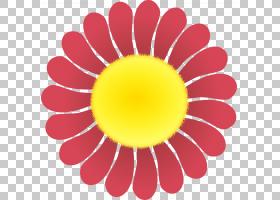 红色圆圈,雏菊家庭,洋红色,线路,圆,向日葵,花瓣,黄色,花,颜色,孩