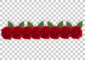 海滩卡通,草,花瓣,玫瑰,植物,黄色,白色,颜色,海滩玫瑰,花,红色,