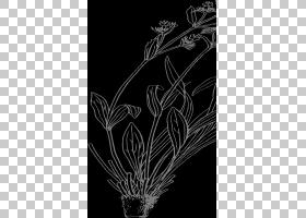 黑白花,草,机翼,树,植物群,黑白,花卉设计,线路,植物茎,分支,叶,