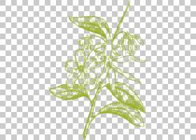 黑白花,黑白,草,线路,植物茎,分支,花,花卉设计,树,叶,植物群,植