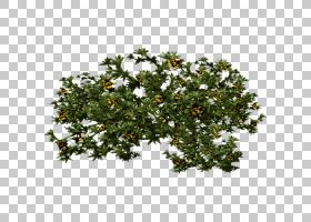 玫瑰花,分支,亚灌木,拉雷拉,花,疾病,三齿接枝草(Zygophyllum Tri