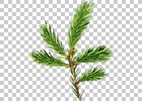 家谱背景,细枝,针叶树,分支,常绿,落叶松,木本植物,柏树族,松树,