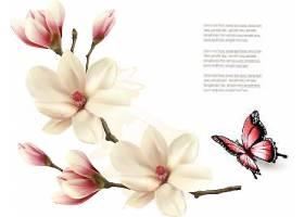 玉兰花与蝴蝶素材