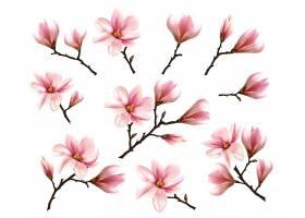 粉色玉兰花