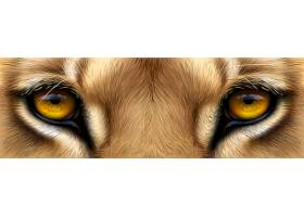 大型猫科动物深邃的眼睛眼眸特写