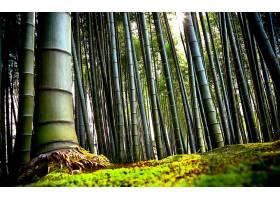 地球,竹子,树,自然,森林,壁纸,图片