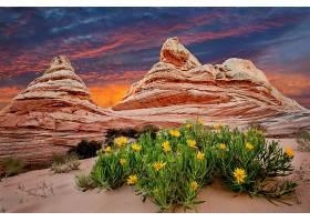 地球,沙漠,风景,壁纸,