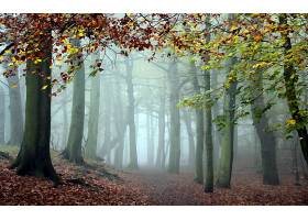 地球,雾,树,秋天,森林,风景,壁纸,图片
