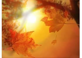 地球,叶子,自然,秋天,壁纸,图片