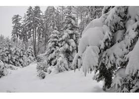 地球,冬天的,壁纸,(70)