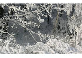 地球,冬天的,壁纸,(54)