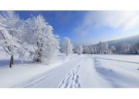 地球,冬天的,树,雪,脚印,壁纸,