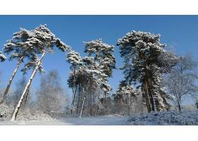 地球,冬天的,壁纸,(31)