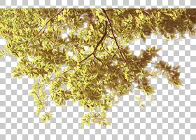 房地产背景,花,细枝,木本植物,阳光,植物,黄色,叶,分支,室内设计