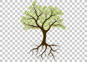黑白花,黑白,线路,植物茎,分支,花,木本植物,细枝,根,叶,植物群,