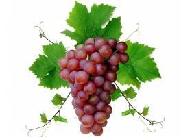 食物,葡萄,水果,壁纸(44)