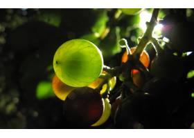 食物,葡萄,水果,壁纸(2)