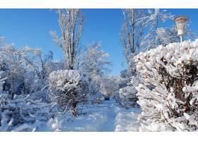 地球,冬天的,壁纸,(315)
