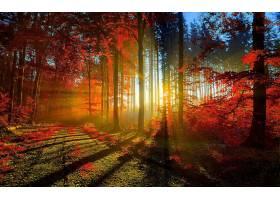 地球,阳光,自然,森林,太阳,壁纸,图片
