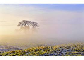 地球,雾,风景,风景优美的,树,秋天,严寒,壁纸,