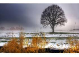 地球,树,树,壁纸,(47)