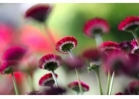 地球,花,花,壁纸,(379)