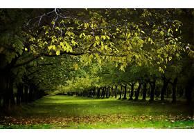 地球,树,树,壁纸,(51)