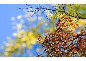 地球,秋天,叶子,树,壁纸,图片