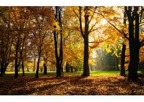 地球,秋天,叶子,树,自然,壁纸,图片